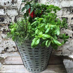 Vintage Olive Basket Herb Planter