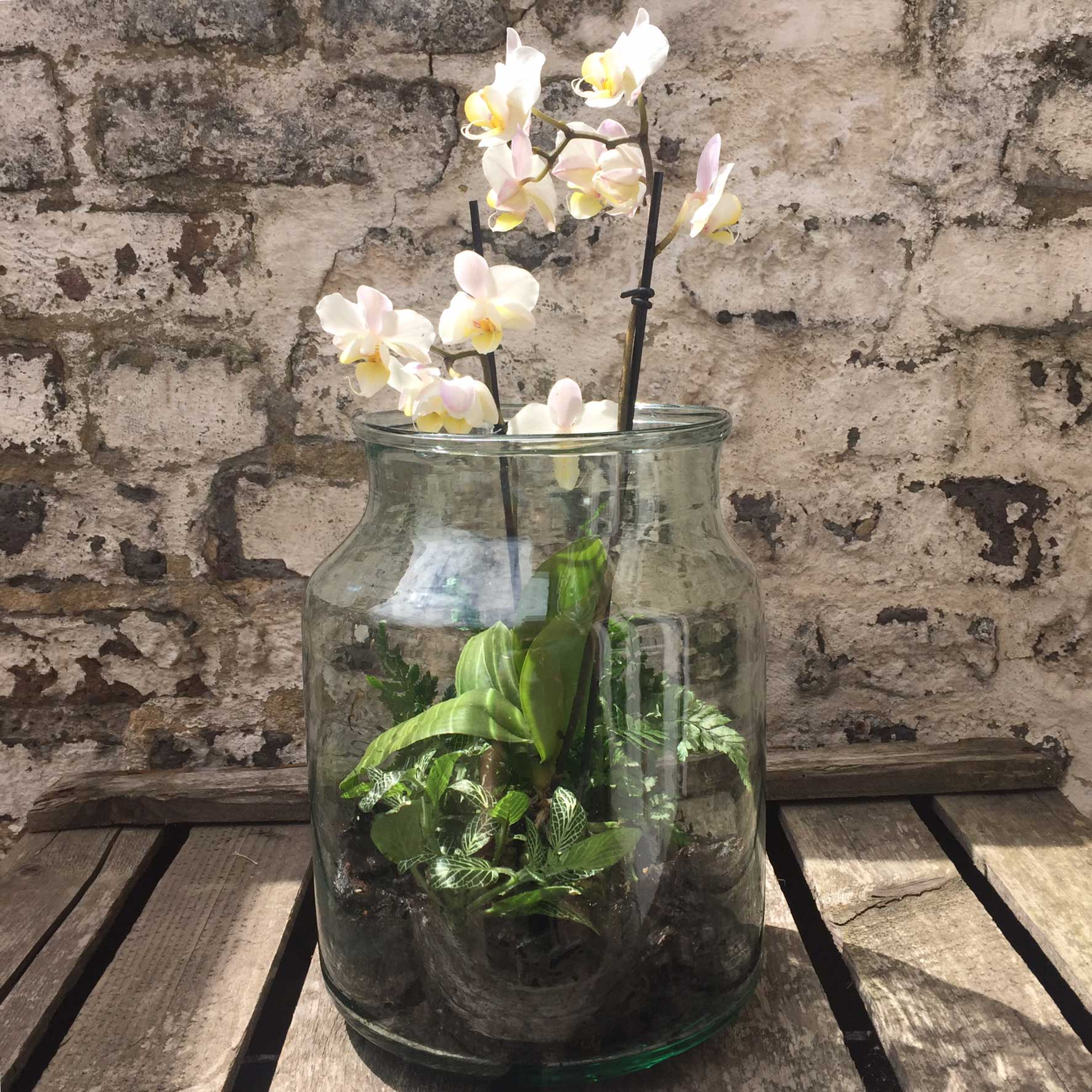 Vintage Glass Pickling Jar Terrarium