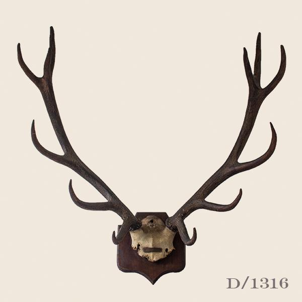 Vintage Stag Antlers