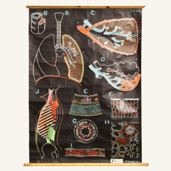 Vintage Digestive System Wall Chart